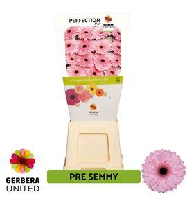 Gerbera pre-semmy 50 x15 - GERPRESEM5015