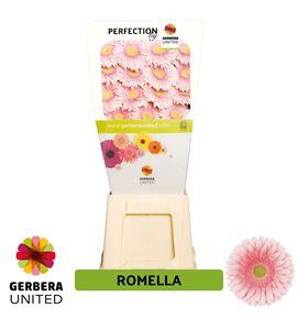 Gerbera romella 50 x15 - GERROM5015