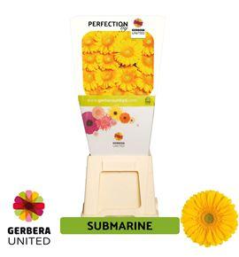 Gerbera submarine 50 x15 - GERSUB5015