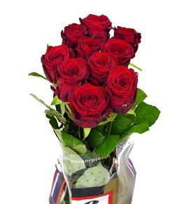 Rosa hol. red naomi 55 - RGRREDNAO