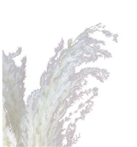 Pampas white 90 - PAMWHI