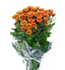 Marg florange - MFLO
