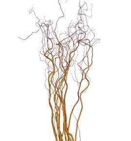 Salix golden curl 140 - SALGOLCUR