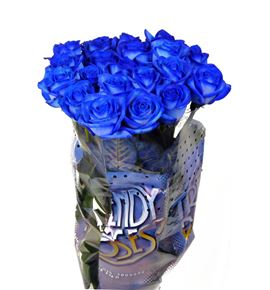 Rosa hol. azul 70 - RGRAZU