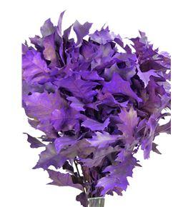 Quercus lila - QUELIL