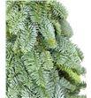 Arbol nobilis 40 - ARBNOB2