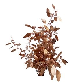 Eucaliptus populus cobre - EUPOPCOB