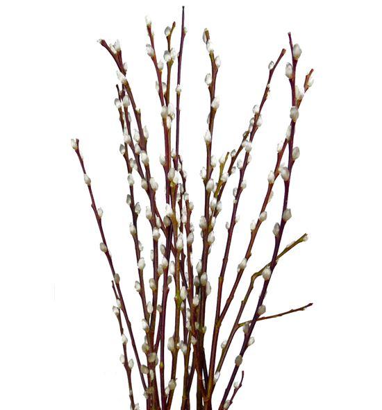 Salix wilgenkatjes 70 - SALWIL