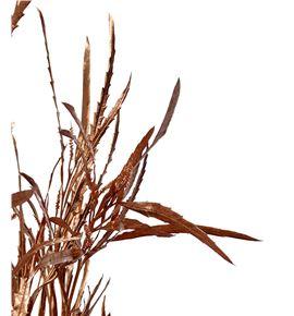 Grevillea cobre - GRECOB