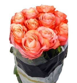 Rosa kahala rosa 50 - RGRKAHROS