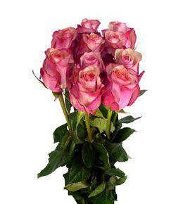 Rosa hol vintage 50 - RGRVIN