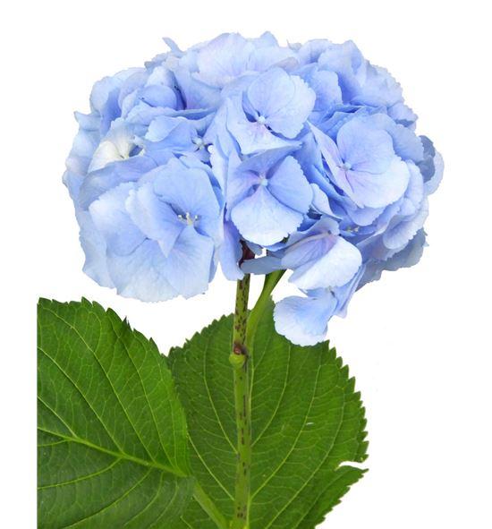 Hydr verena azul 80 - HYDVERAZU