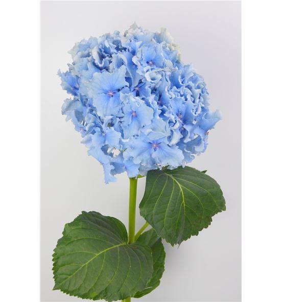 Hydr spike azul 60 - HYDSPIAZU