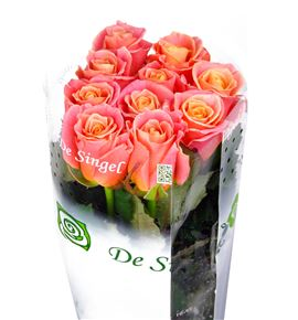 Rosa hol miss piggy 50 - RGRMISPIG