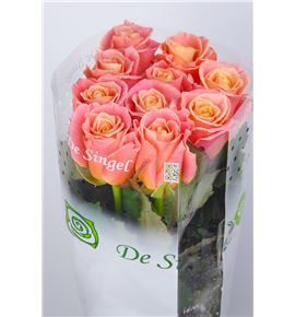Rosa hol miss piggy 60 - RGRMISPIG