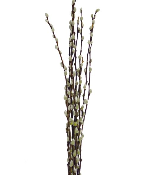 Salix snow flake 70 - SALIXGATE