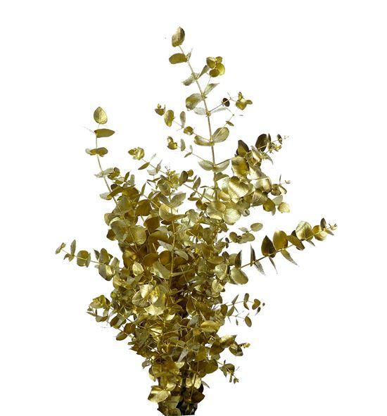 Eucaliptus cinerea oro - EUCINORO