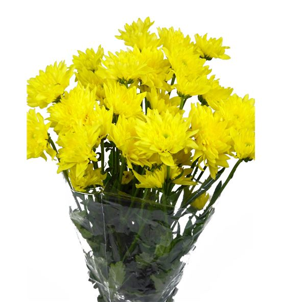 Marg baltica yellow - MHBALYEL