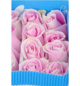 Rosa col rosita vendela 60 - RCROSVEN