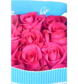 Rosa col hot paris 60 - RCHOTPAR