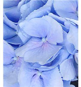 Hydr verena azul 40 - HYDVERAZU