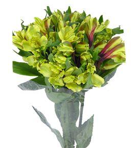 Alstroemeria fancy verde - ALSEVER