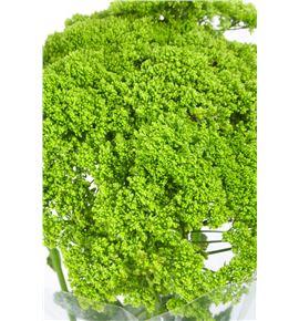 Trach briba green 80 - TRABRIGRE