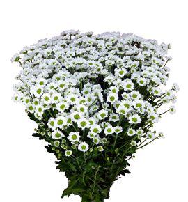 Cr santini lindi white 55 - CRSLINWHI