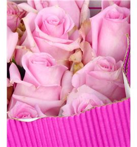 Rosa col jessica 40 - RCJES