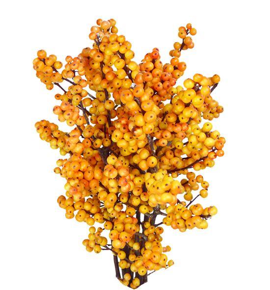 Ilex cresgold 40 - ILECRE