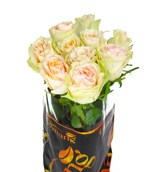 Rosa hol brinesse 60 - RGRBRI