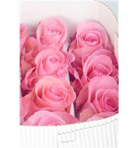 Rosa col hig bonita 40 - RCHIGBON