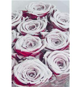 Rosa red naomi nieve blanca 70 - RGRREDNAONIE