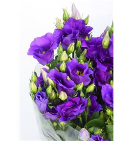 Lisianthus evanthi black purple 70 - LISEVABLA