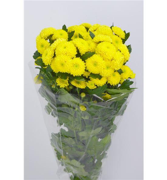 Marg hol cocnut yellow - MHCOCYEL