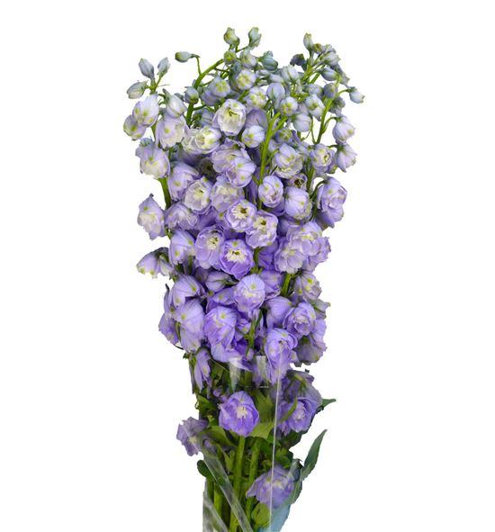 Delph magic lavender 80 - DELMAGLAV