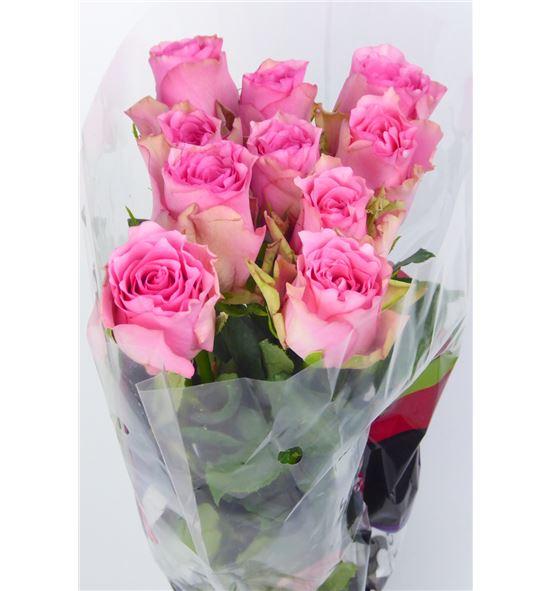 Rosa hol. lovely rhodos 60 - RGRLOVRHO