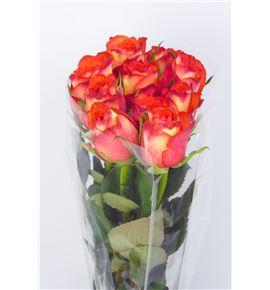 Rosa hol high & orange magic 50 - RGRHIGORAMAG
