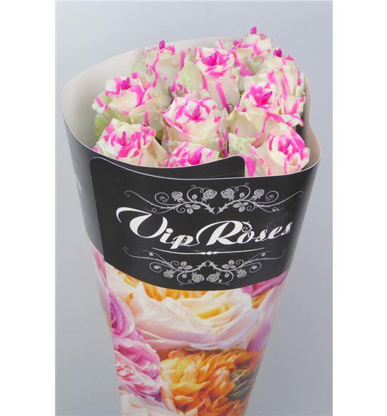 Rosa hol choco blanco/rosa 70 - RGRCHOBLAROS