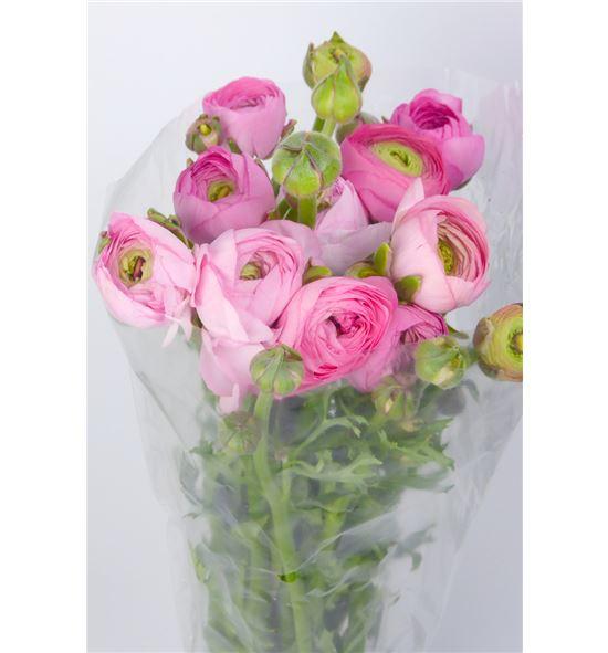 Ranunculo rosa - RANROS