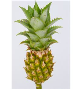 Ananas baby green 50 - ANABABGRE