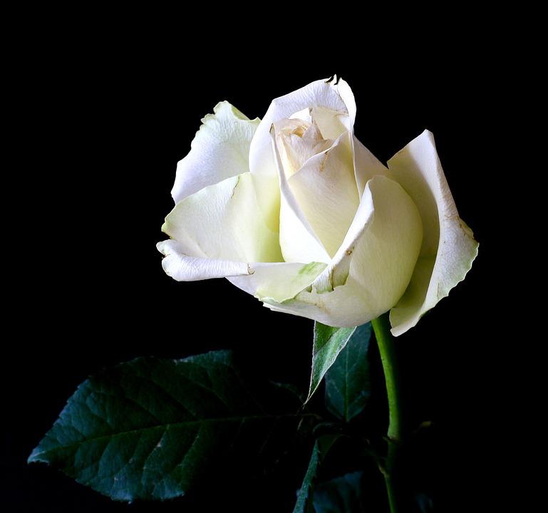 Qué Significa El Color De Las Rosas Blog Sobre Los Secretos De La