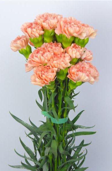 Conoce Nuestras 5 Variedades Florales Favoritas Para