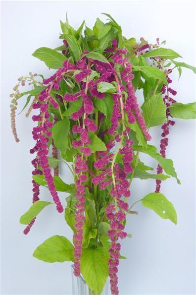 5 Flores Estilo Silvestre Para Realizar Arreglos Florales