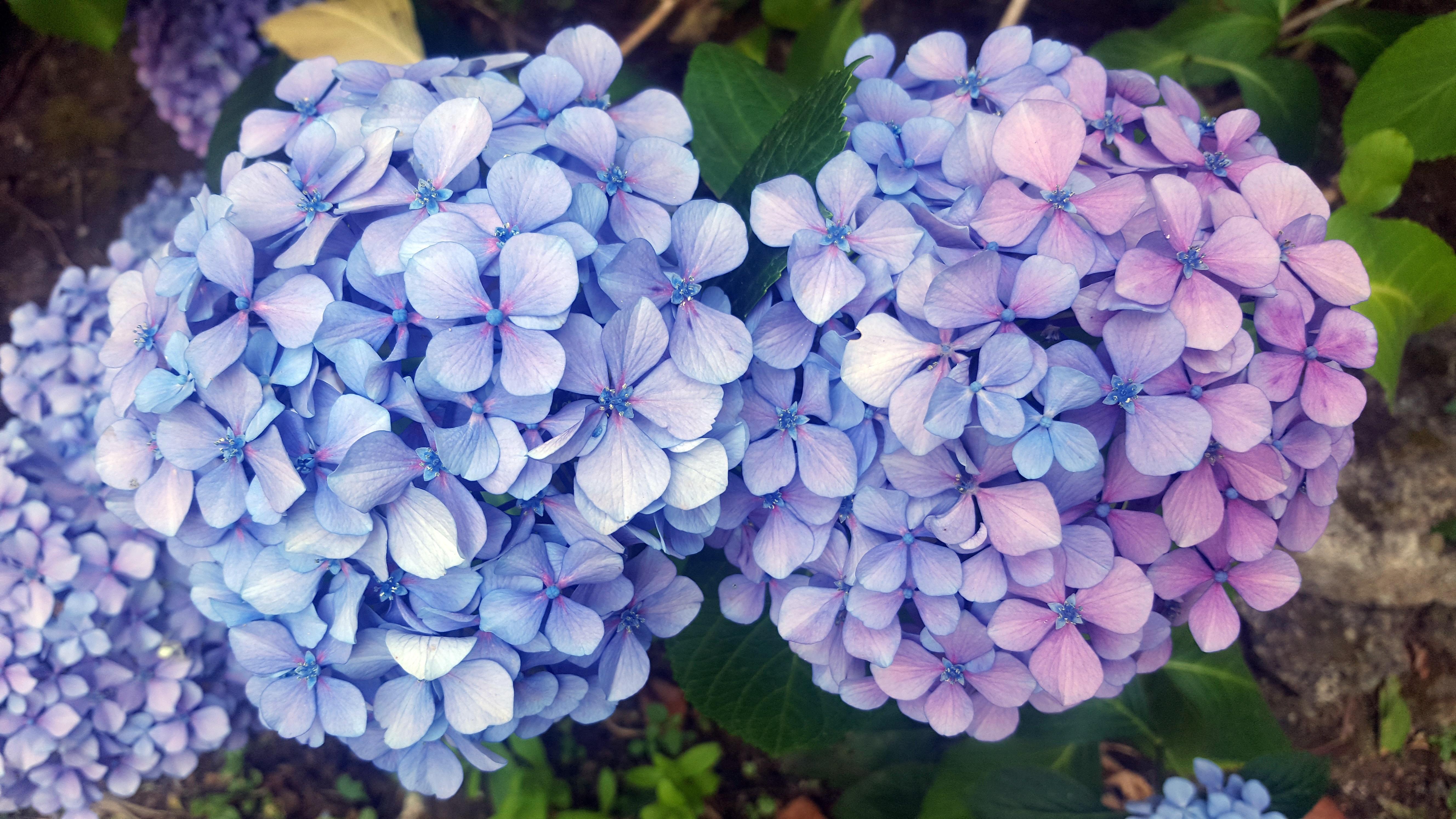 colores de las flores