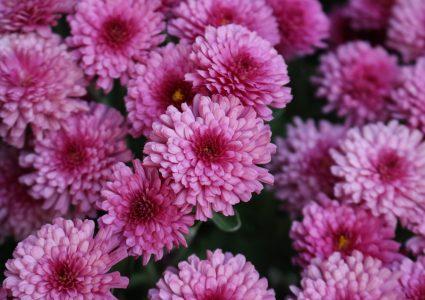 ¿ Por qué las flores tienen diferentes colores?