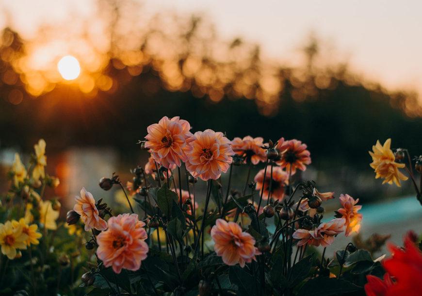 eventos y lugares flores