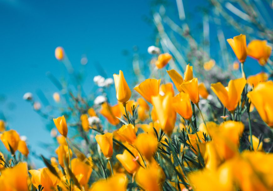 Curiosidades de las flores