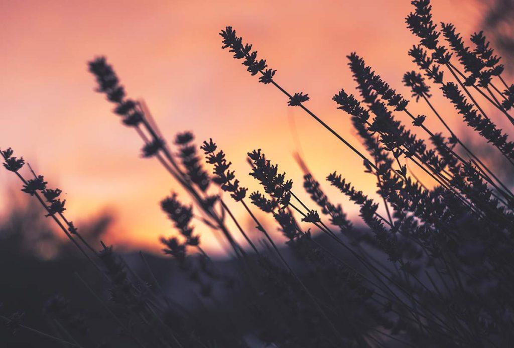 Flores que mejor aguantan el frío