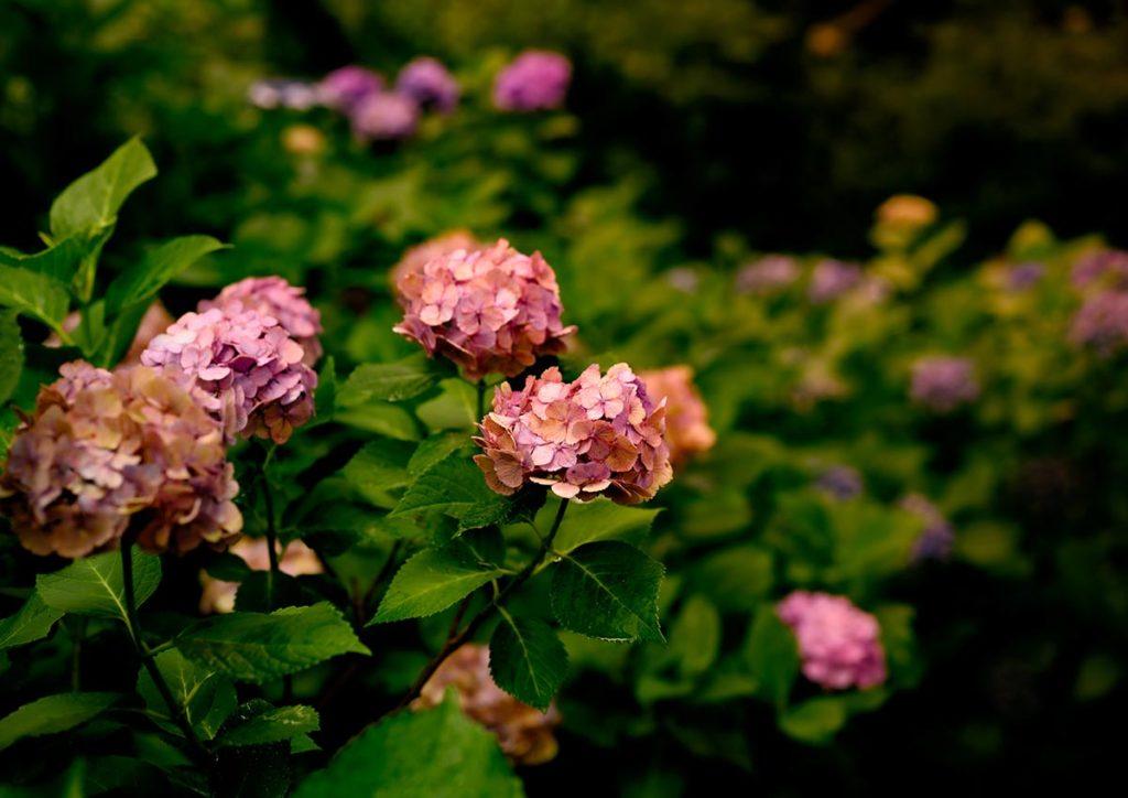 Lugares con más flores del planeta